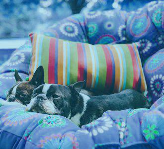 Odstranění zápachu zvířat ozonem